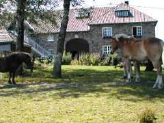 Ferienwohnung Urlaub auf dem Bauernhof - Victorhof, Ferienwohnung - Ferienhaus in Deutschland, Monschau-Mützenich, Eifel