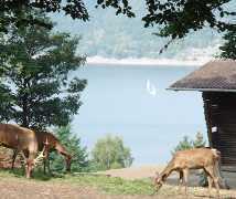 Ferienhaus Ferien auf dem Bauernhof Kassel - Edersee, Ferienwohnung - Ferienhaus in Deutschland, Naumburg Hessen, Nordhessen Kassel Edersee